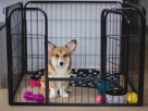 Why Should You Use A Puppy Pen For Your Little Dog?