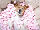 4 Benefits of Marshmallow Beds for Pets